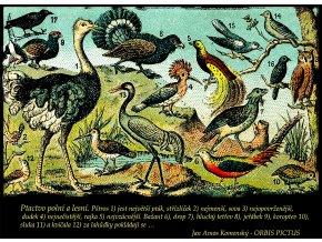Orbis Pictus - ptáci (Pánské/Dámské Pánské černé, Velikost XXL)