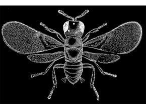 Klíšťožrout - tričko s potiskem (Pánské/Dámské Dámské černé, Velikost XXL)