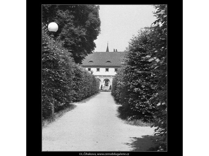 Cesta lemovaná keři (167-1), Praha 1959 červen, černobílý obraz, stará fotografie, prodej