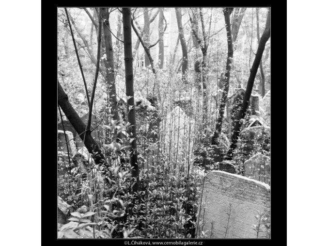Ze židovského hřbitova (608-16), Praha 1960 květen, černobílý obraz, stará fotografie, prodej