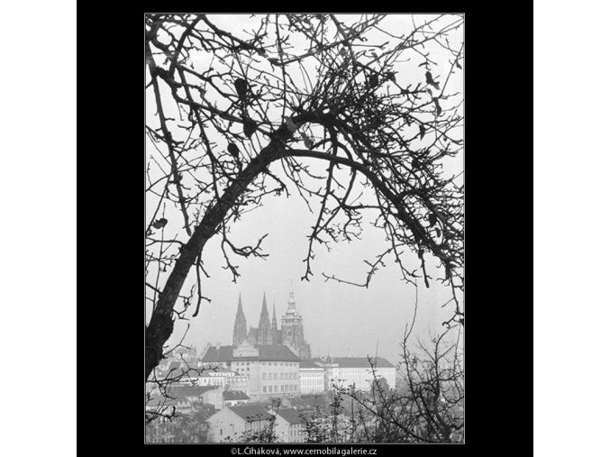 Pohled na Hrad (964-2), Praha 1960 listopad, černobílý obraz, stará fotografie, prodej