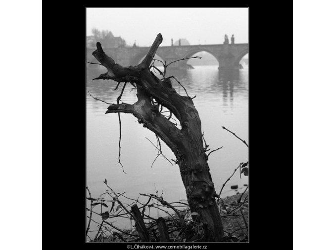 Pahýl starého stromu (959), Praha 1960 říjen, černobílý obraz, stará fotografie, prodej