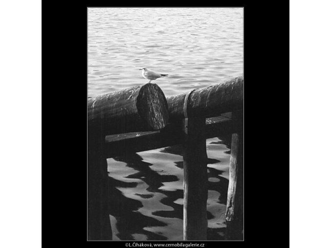 Rackové (1026-1), žánry - Praha 1960 listopad, černobílý obraz, stará fotografie, prodej