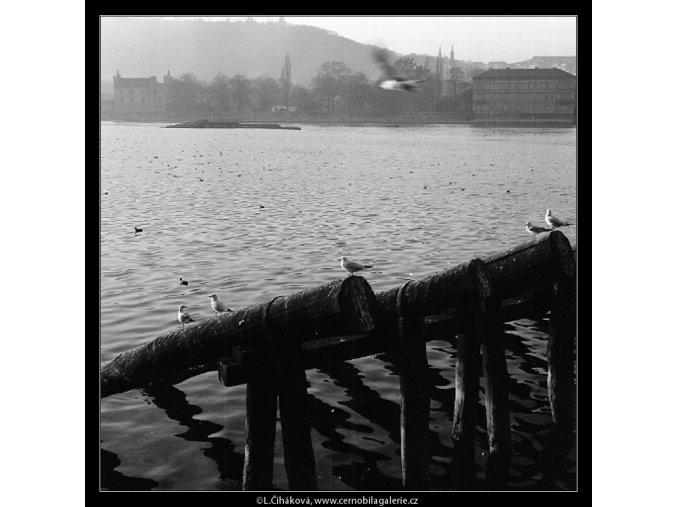 Rackové (1026-2), žánry - Praha 1960 listopad, černobílý obraz, stará fotografie, prodej