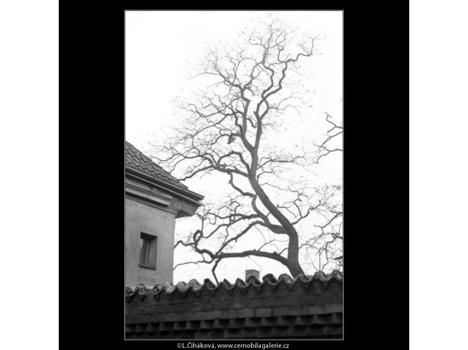 Zídka a holý strom (1117-2), Praha 1961 duben, černobílý obraz, stará fotografie, prodej