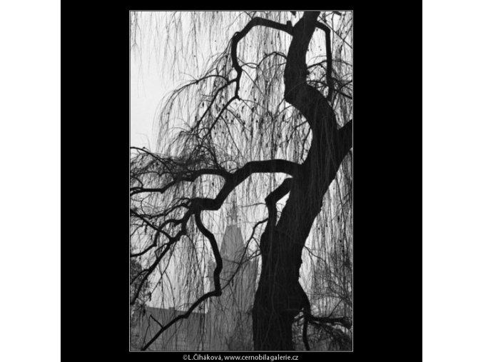 Strom a větvoví (1418-3), žánry - Praha 1962 leden, černobílý obraz, stará fotografie, prodej