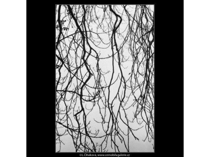 Větvičky (1964), žánry - Praha 1962 listopad, černobílý obraz, stará fotografie, prodej