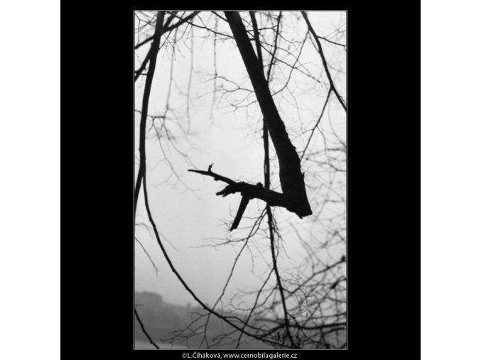 Zlomená větev v mlze (1981), žánry - Praha 1962 podzim, černobílý obraz, stará fotografie, prodej