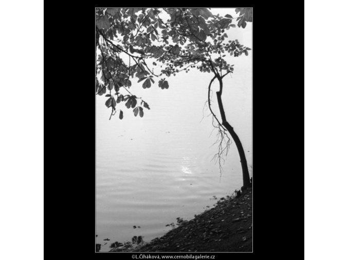 Strom a odlesky na vodě (1975-2), žánry - Praha 1962 , černobílý obraz, stará fotografie, prodej