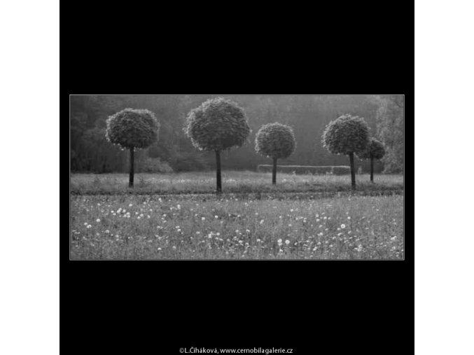 Stromy v protisvětle (2215), žánry - Praha 1963 červen, černobílý obraz, stará fotografie, prodej