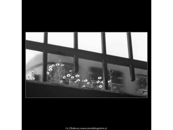 Zábradlí a kvítky (2281-1), žánry - Praha 1963 červen, černobílý obraz, stará fotografie, prodej