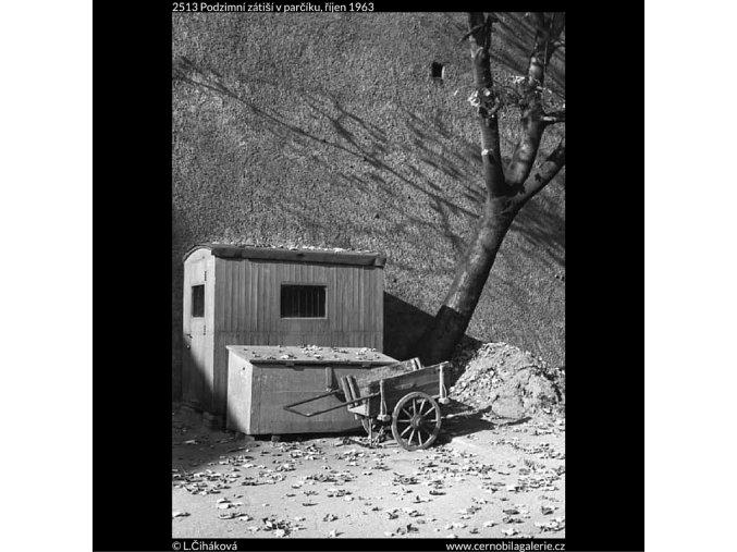 Podzimní zátiší v parčíku (2513), žánry - Praha 1963 říjen, černobílý obraz, stará fotografie, prodej
