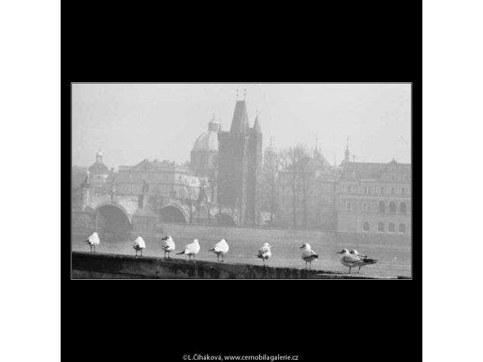 Rackové na Kampě (2701-1), žánry - Praha 1964 únor, černobílý obraz, stará fotografie, prodej