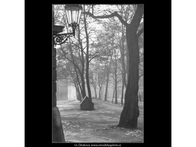 Stromořadí (2708), žánry - Praha 1964 únor, černobílý obraz, stará fotografie, prodej