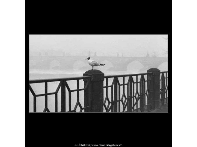 Racek na zábradlí (2750-4), žánry - Praha 1964 březen, černobílý obraz, stará fotografie, prodej