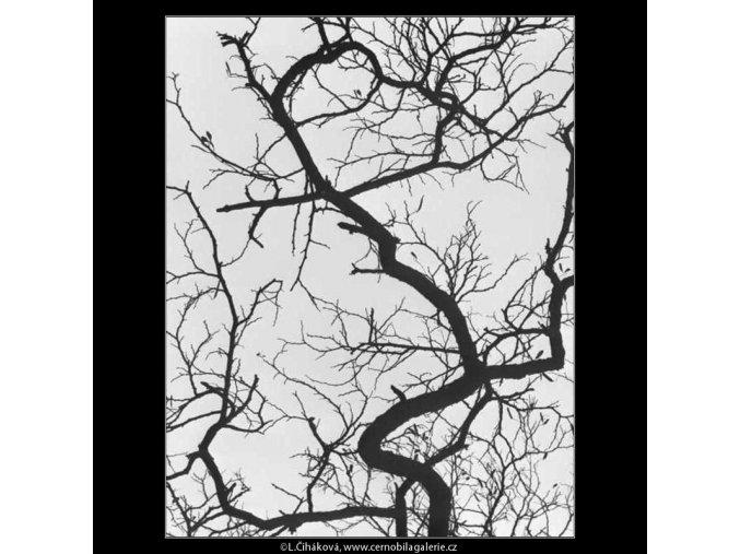 Větve proti obloze (2751-1), žánry - Praha 1964 březen, černobílý obraz, stará fotografie, prodej
