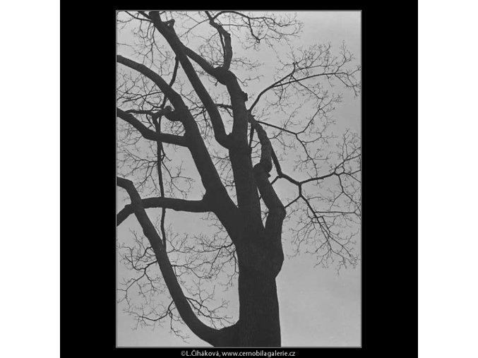 Stromy (3343-14), žánry - Praha 1964 listopad, černobílý obraz, stará fotografie, prodej
