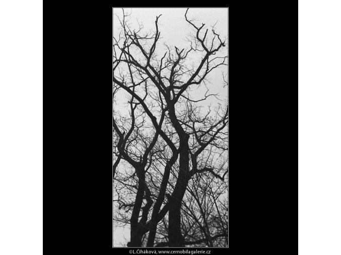 Strom (3480-2), Praha 1965 únor, černobílý obraz, stará fotografie, prodej
