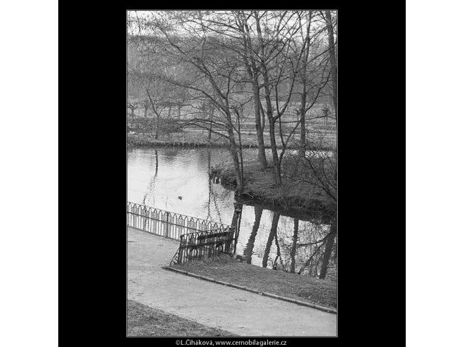 Jezírko ve Stromovce (3597), žánry - Praha 1965 březen, černobílý obraz, stará fotografie, prodej