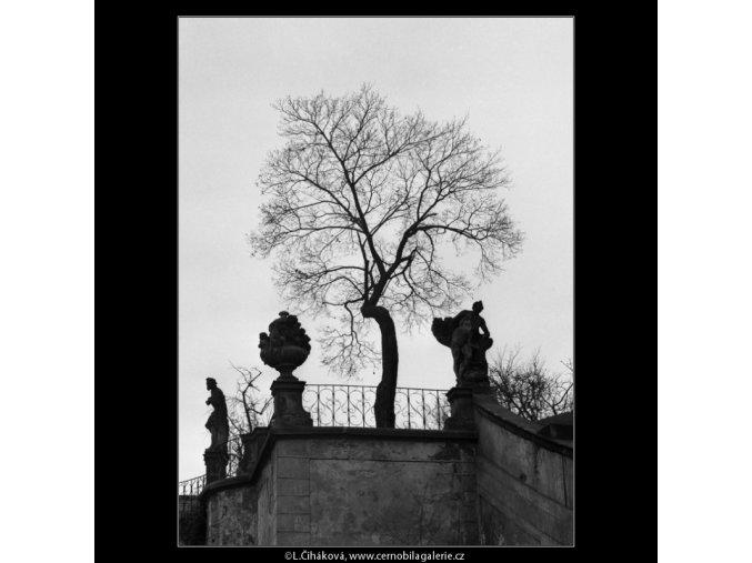 Z Vrtbovské zahrady (2155), Praha 1963 duben, černobílý obraz, stará fotografie, prodej
