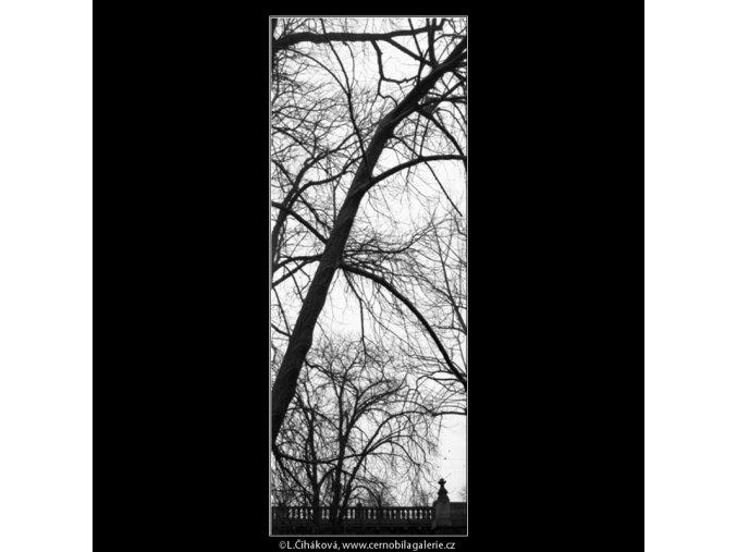 Stromy (5028-4), žánry - Praha 1966 prosinec, černobílý obraz, stará fotografie, prodej