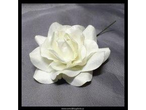 Růže smetanová