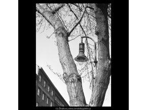 Lampa mezi větvemi (5267), Praha 1967 duben, černobílý obraz, stará fotografie, prodej