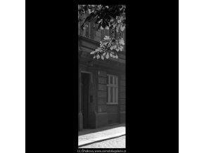 Podzimní větev (5599), žánry - Praha 1967 září, černobílý obraz, stará fotografie, prodej