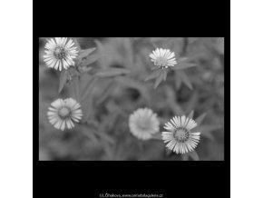 Květinky (5647), žánry - Praha 1967 říjen, černobílý obraz, stará fotografie, prodej