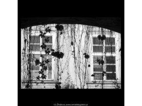 Větvoví, oblouk, okna (5624-1), žánry - Praha 1967 září, černobílý obraz, stará fotografie, prodej