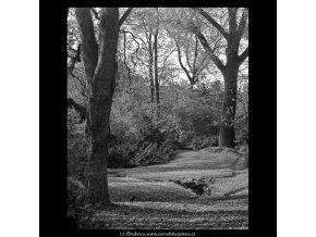 Podzimní zákoutí (5671), žánry - Praha 1967 říjen, černobílý obraz, stará fotografie, prodej