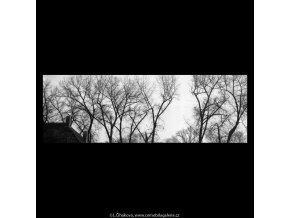 Kampa ve větvích (5695), žánry - Praha 1967 listopad, černobílý obraz, stará fotografie, prodej