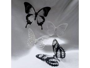 202306 motyl-transparent