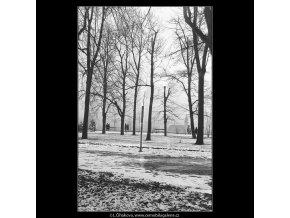 V Letenských sadech (1058-3), žánry - Praha 1961 únor, černobílý obraz, stará fotografie, prodej