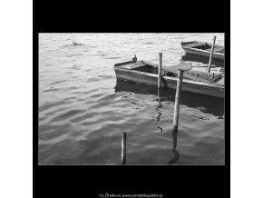 Kachny na Vltavě (1059-2), žánry - Praha 1961 leden, černobílý obraz, stará fotografie, prodej