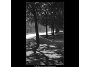 Stíny v aleji (1738), žánry - Praha 1962 červenec, černobílý obraz, stará fotografie, prodej