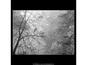Holé větve (1980-1), žánry - Praha 1962 podzim, černobílý obraz, stará fotografie, prodej