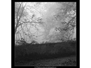 Holé větve (1980-2), žánry - Praha 1962 podzim, černobílý obraz, stará fotografie, prodej