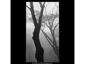 Kmeny stromů v mlze (1858), žánry - Praha 1962 říjen, černobílý obraz, stará fotografie, prodej