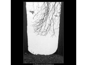 Hladina mezi kmeny (1859-2), žánry - Praha 1962 říjen, černobílý obraz, stará fotografie, prodej