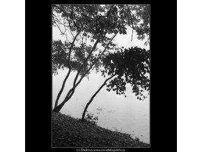 Stromky skloněné nad hladinu (1859-4), žánry - Praha 1962 říjen, černobílý obraz, stará fotografie, prodej
