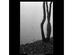 Propletený kmínek (1859-5), žánry - Praha 1962 říjen, černobílý obraz, stará fotografie, prodej