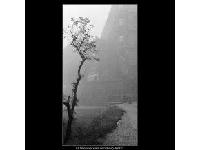 Opuštěný stromek (1969), žánry - Praha 1962 prosinec, černobílý obraz, stará fotografie, prodej