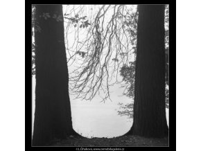 Dva kmeny (1859-1), žánry - Praha 1962 říjen, černobílý obraz, stará fotografie, prodej