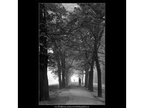 Metaři a stromořadí (1864), žánry - Praha 1962 říjen, černobílý obraz, stará fotografie, prodej