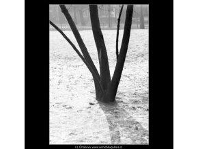 Část stromu a stín (2039), žánry - Praha 1963 zima, černobílý obraz, stará fotografie, prodej