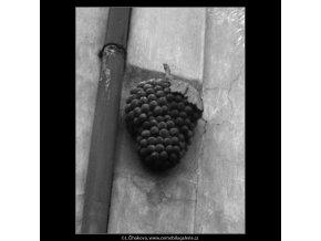 U Zeleného hroznu (2084), Praha 1963 duben, černobílý obraz, stará fotografie, prodej