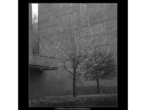Jaro začíná (2110), žánry - Praha 1963 duben, černobílý obraz, stará fotografie, prodej