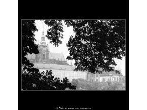 Pohled na Hrad skrz větvoví (2298-2), Praha 1963 červenec, černobílý obraz, stará fotografie, prodej