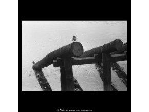 Dvě kachny na hrázi (2553), žánry - Praha 1963 , černobílý obraz, stará fotografie, prodej